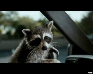 Animal Driving 1